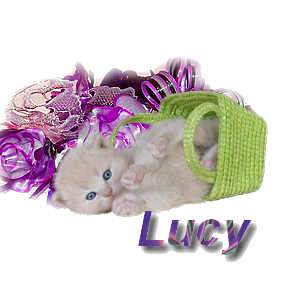 Créa signature LUCY