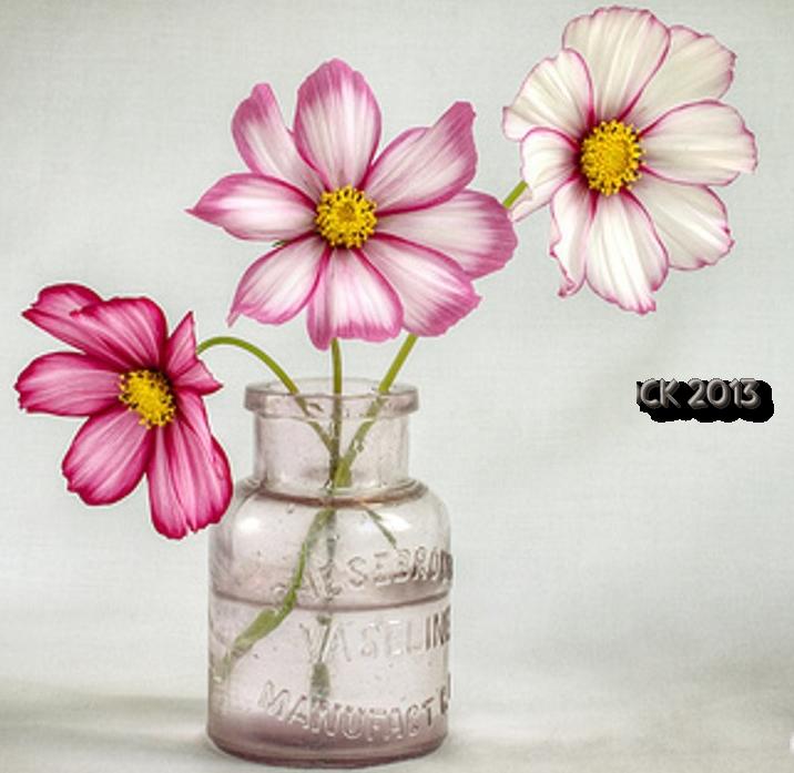 vase et fleurs mauves et blanches. Black Bedroom Furniture Sets. Home Design Ideas